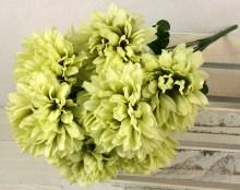 Kytica chryzantéma x9JX2094